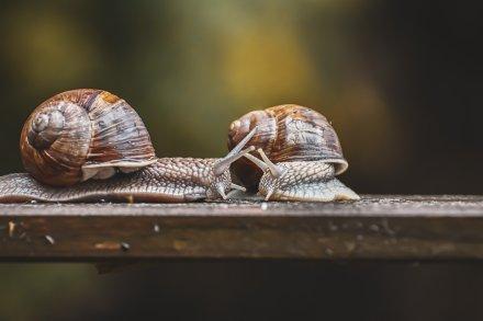 snail-5353573_1920